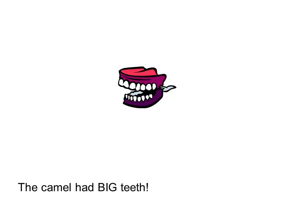The camel had BIG teeth!