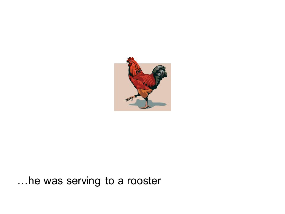 …he was serving to a rooster
