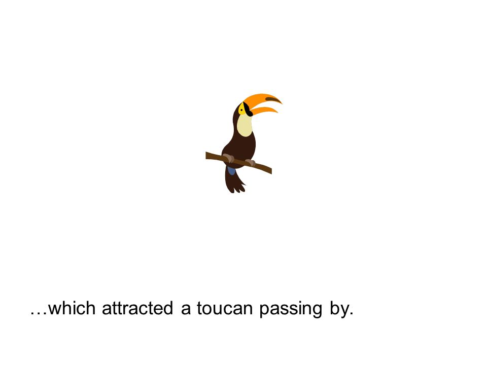 …which attracted a toucan passing by.