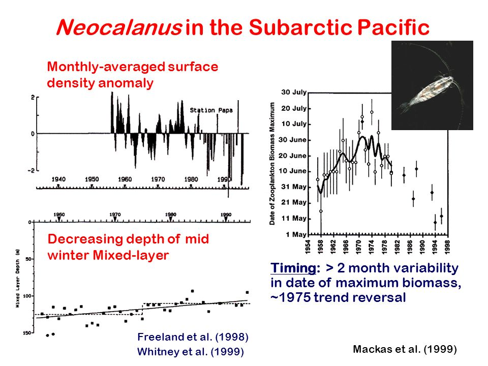 Neocalanus in the Subarctic Pacific Decreasing depth of mid winter Mixed-layer Monthly-averaged surface density anomaly Freeland et al. (1998) Whitney