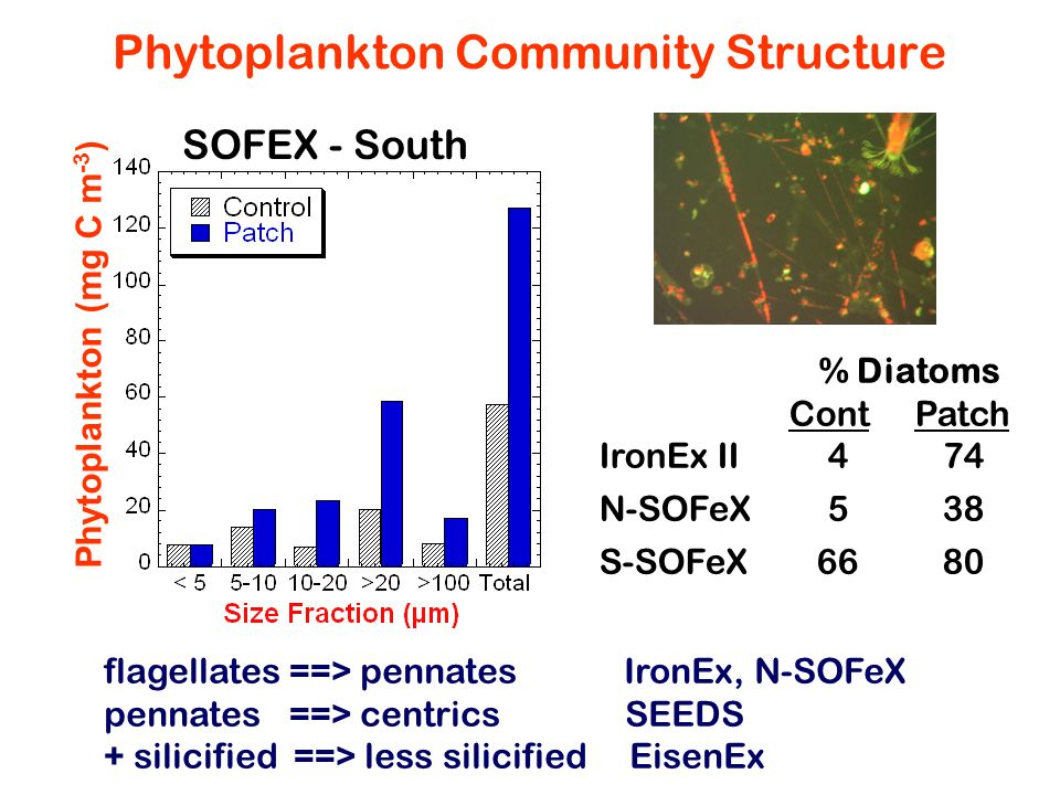 Phytoplankton Community Structure % Diatoms Cont Patch IronEx II474 N-SOFeX538 S-SOFeX6680 Phytoplankton (mg C m -3 ) SOFEX - South flagellates ==> pe