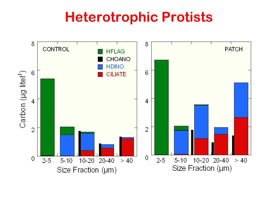 Heterotrophic Protists