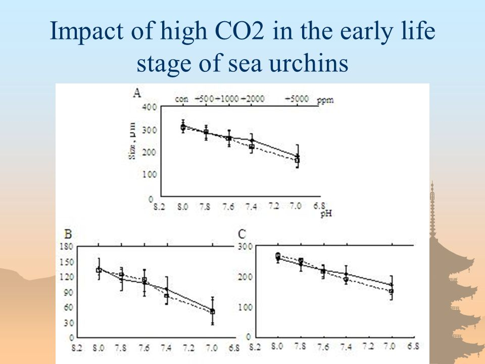 Impact of high CO2 in the early life stage of sea urchins