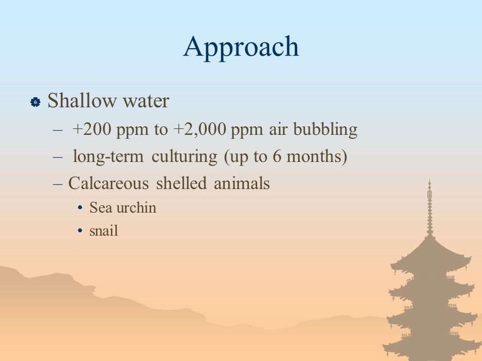 Approach Shallow water – +200 ppm to +2,000 ppm air bubbling – long-term culturing (up to 6 months) –Calcareous shelled animals Sea urchin snail