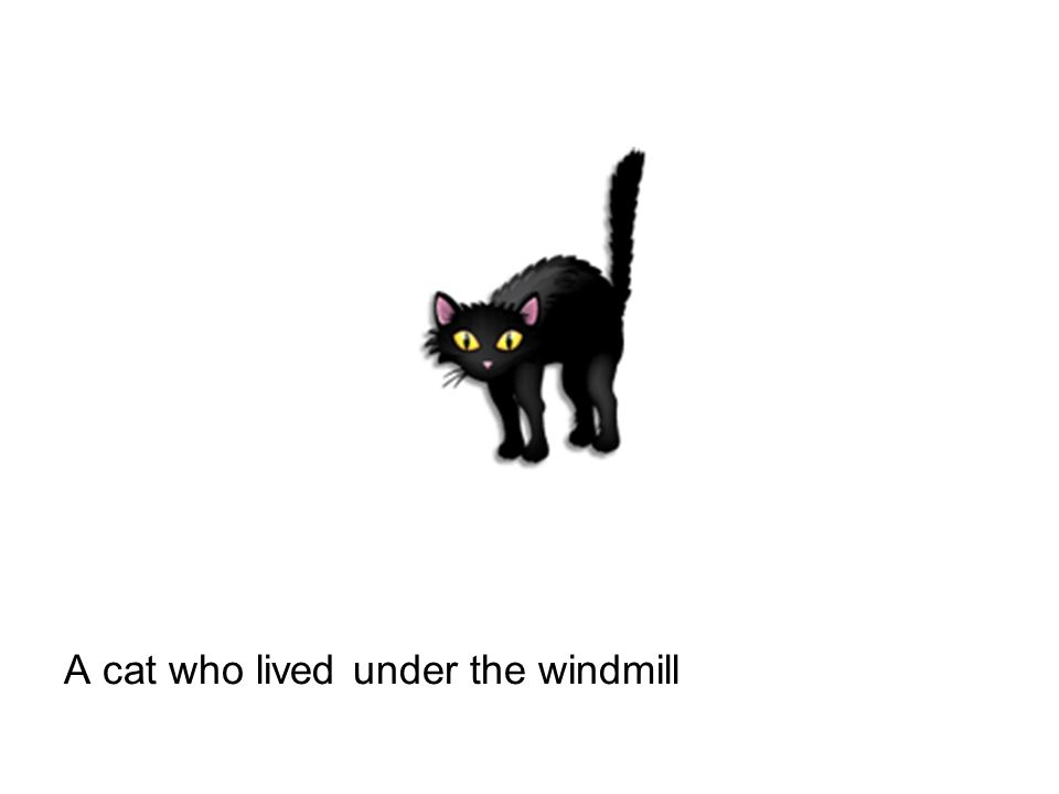 A cat who lived under the windmill