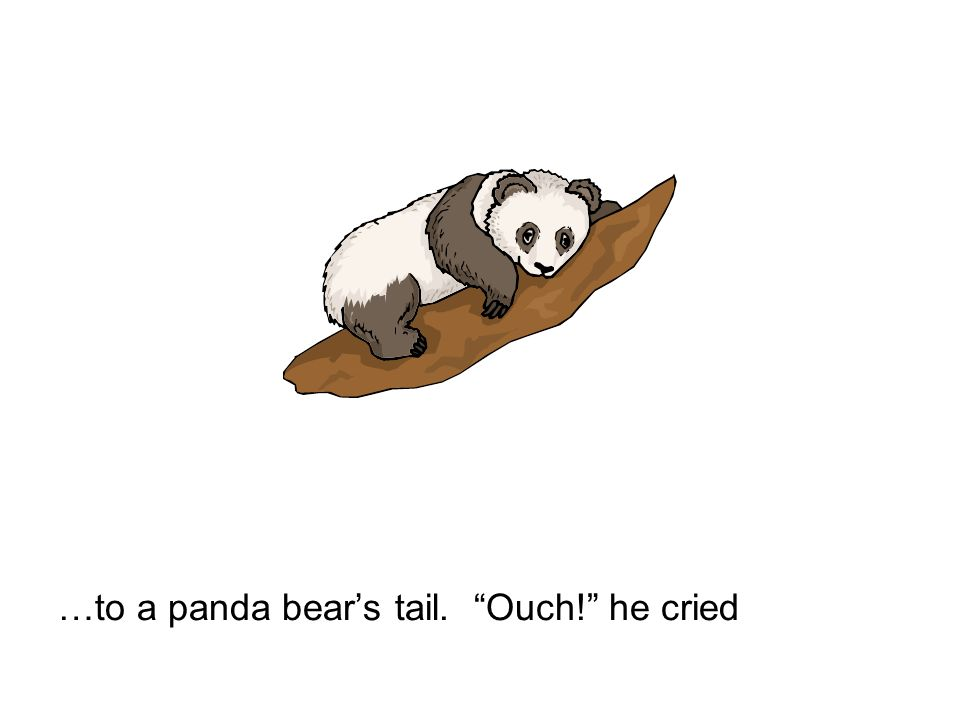 …to a panda bears tail. Ouch! he cried