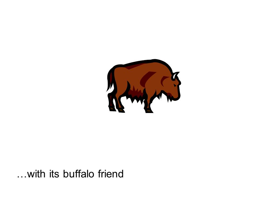 …with its buffalo friend