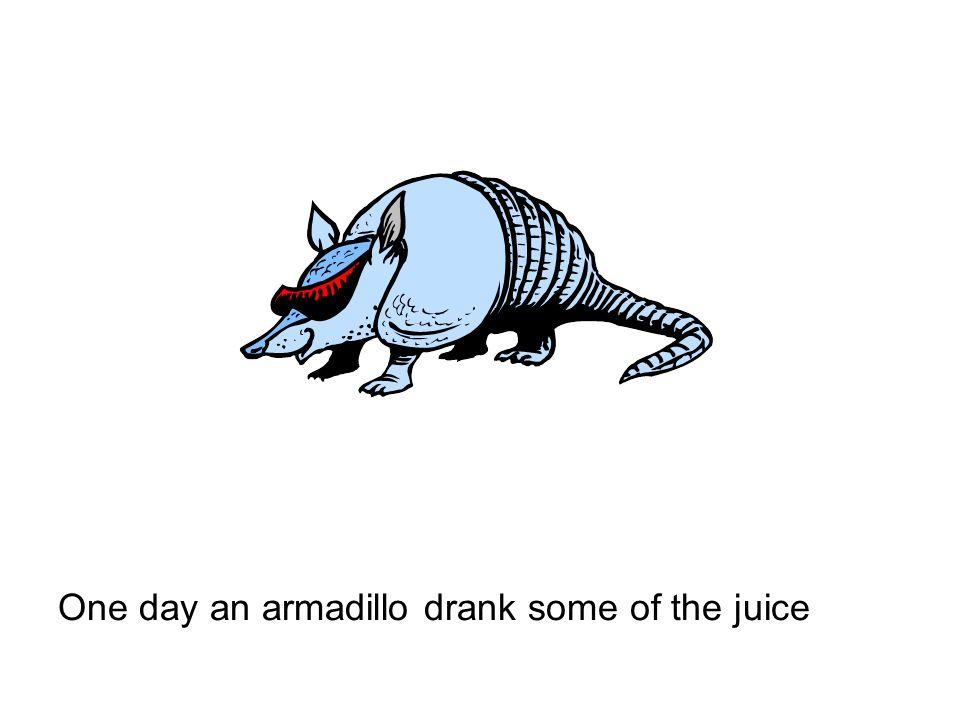 One day an armadillo drank some of the juice
