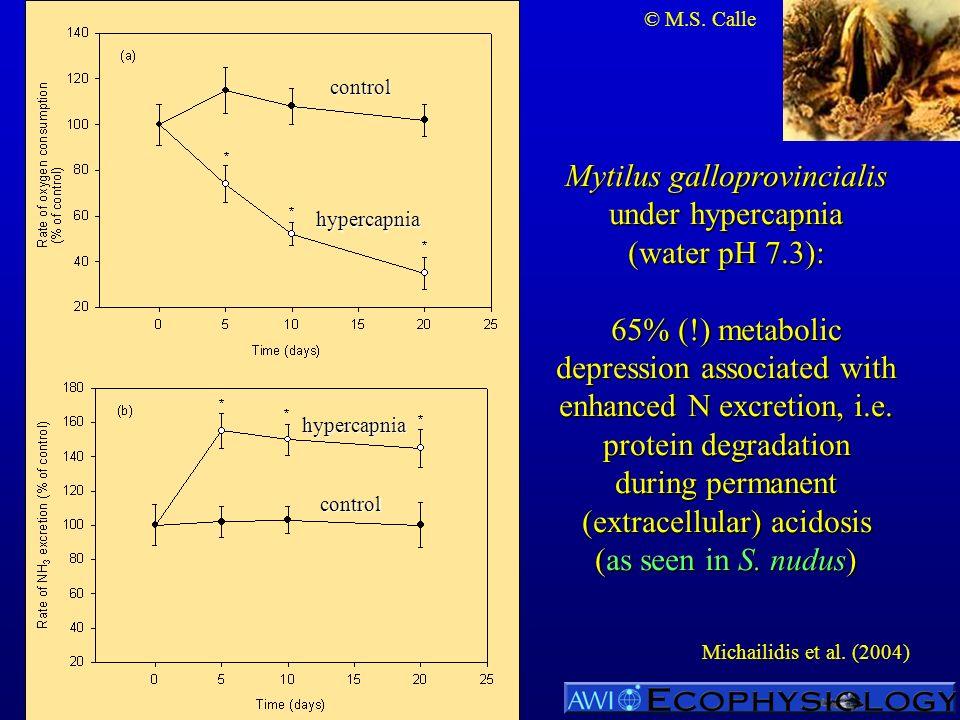 Mytilus galloprovincialis under hypercapnia (water pH 7.3): 65% (!) metabolic depression associated with enhanced N excretion, i.e. protein degradatio