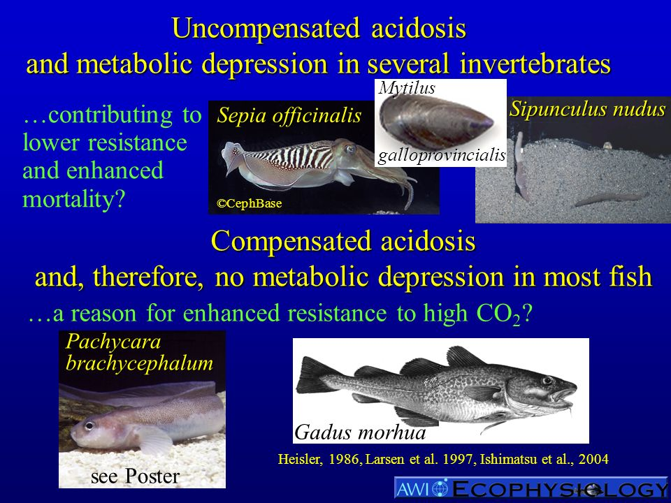 Uncompensated acidosis and metabolic depression in several invertebrates …contributing to lower resistance and enhanced mortality? Compensated acidosi