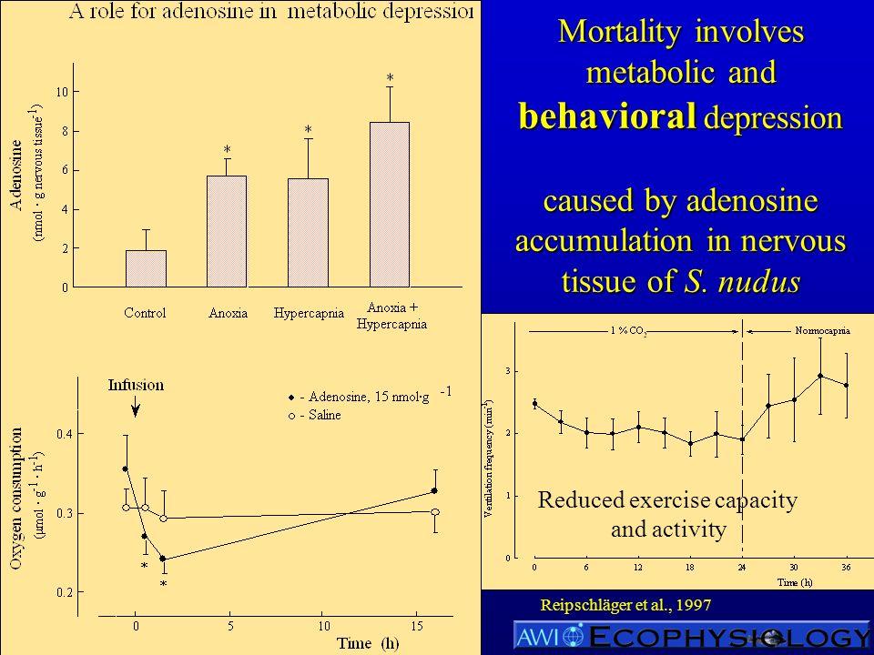Mortality involves metabolic and behavioral depression caused by adenosine accumulation in nervous tissue of S. nudus Reipschläger et al., 1997 Reduce