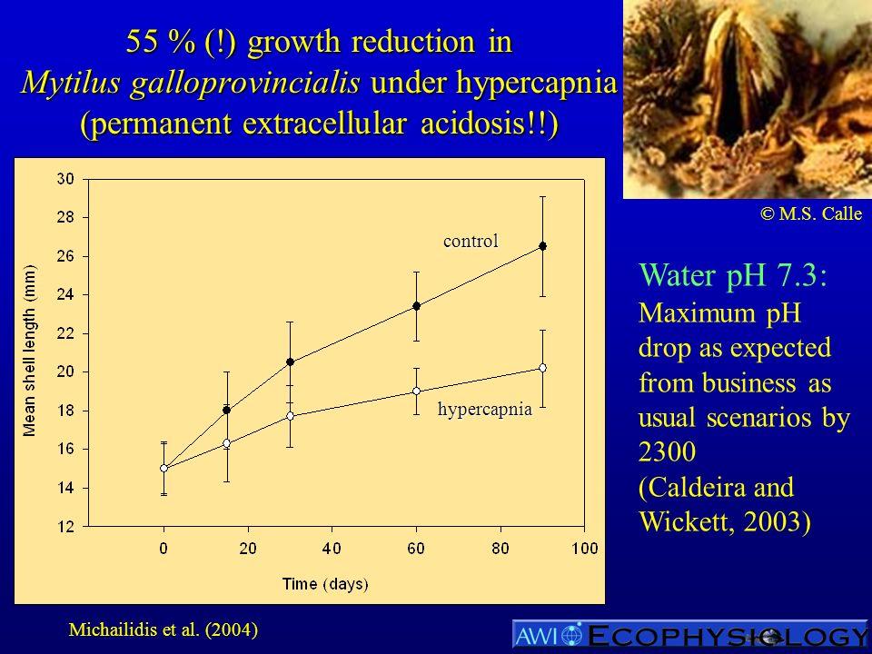 55 % (!) growth reduction in Mytilus galloprovincialis under hypercapnia (permanent extracellular acidosis!!) Water pH 7.3: Maximum pH drop as expecte