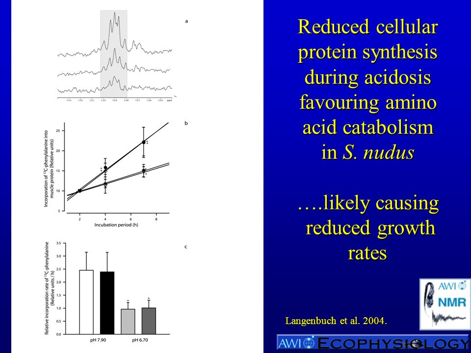 Reduced cellular protein synthesis during acidosis favouring amino acid catabolism in S.