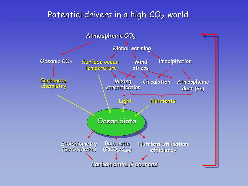 Potential drivers in a high-CO 2 world Atmospheric CO 2 Mixing,stratificationCirculation LightNutrients Carbon sinks & sources Oceanic CO 2 Carbonatec