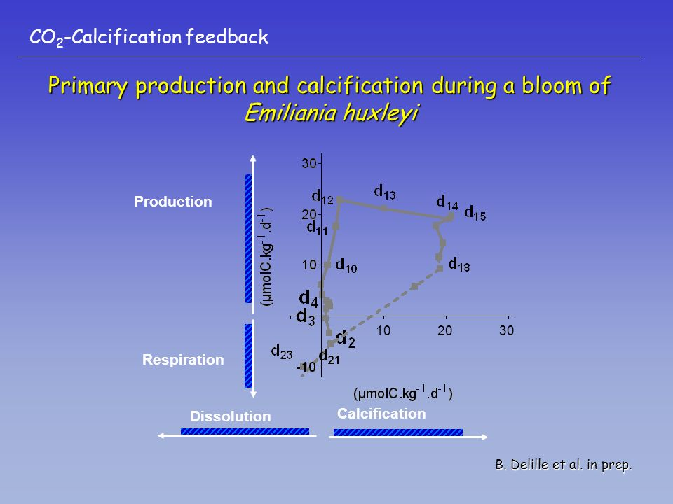 Primary production and calcification during a bloom of Emiliania huxleyi Calcification Production Dissolution Respiration B. Delille et al. in prep. C