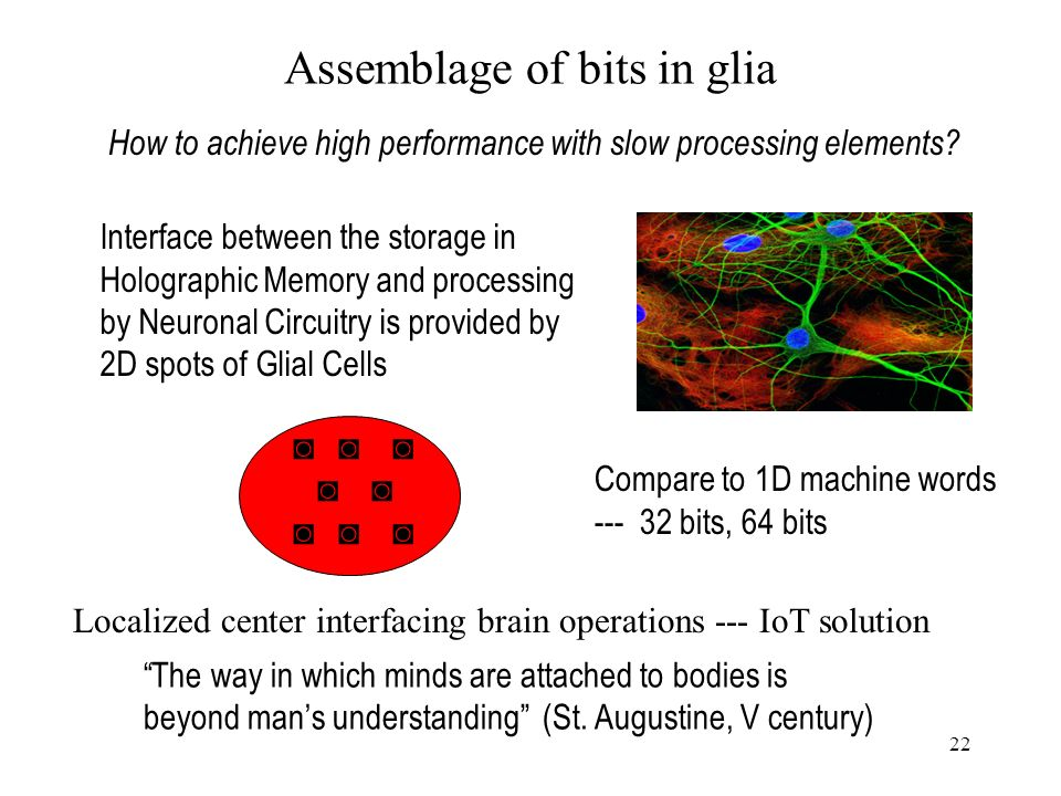 22 Assemblage of bits in glia Interface between the storage in Holographic Memory and processing by Neuronal Circuitry is provided by 2D spots of Glial Cells Compare to 1D machine words --- 32 bits, 64 bits How to achieve high performance with slow processing elements.