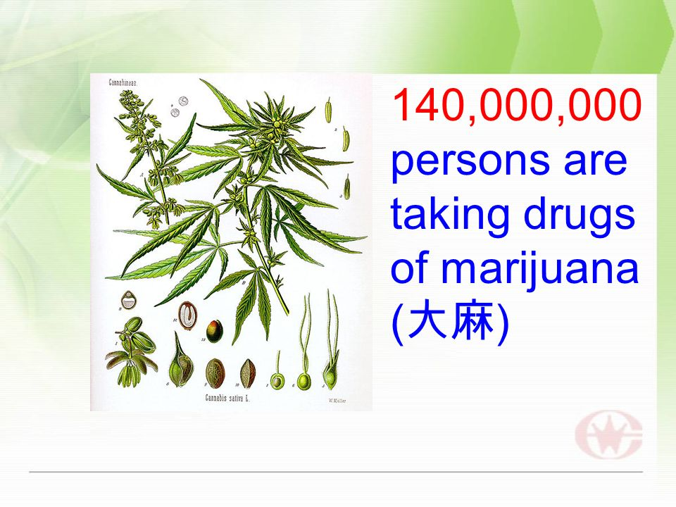 140,000,000 persons are taking drugs of marijuana ( )