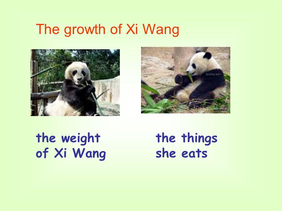 the weight of Xi Wang the things she eats The growth of Xi Wang