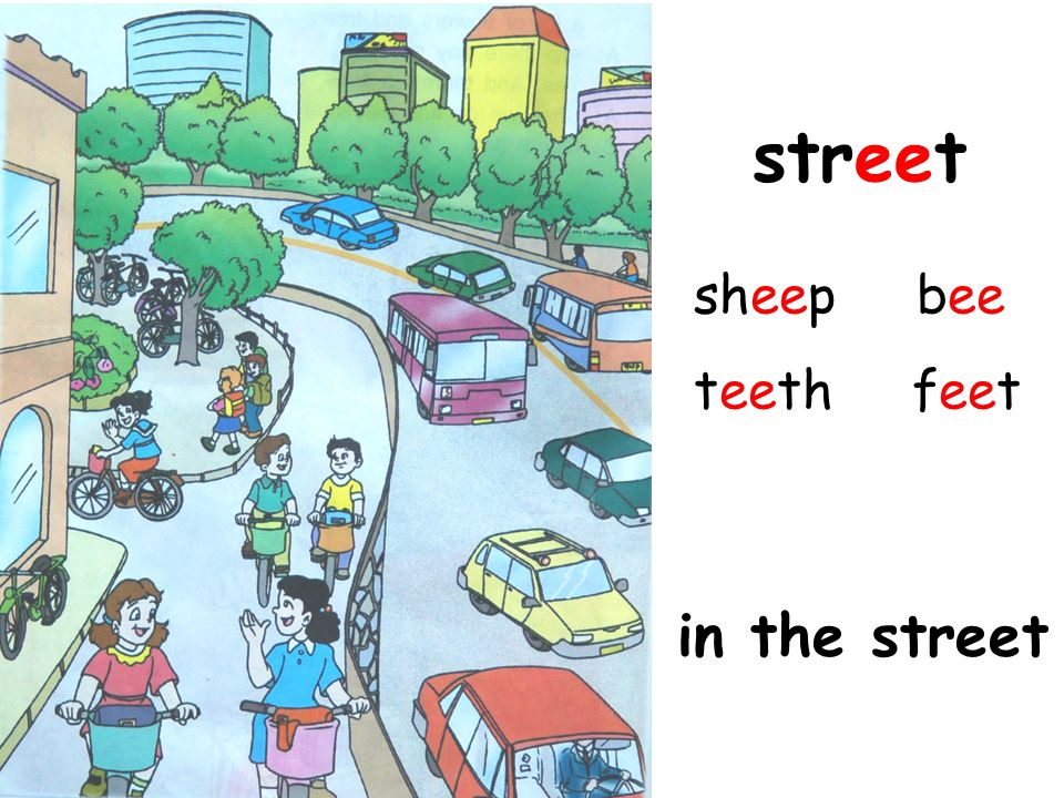 street sheep bee teeth feet in the street