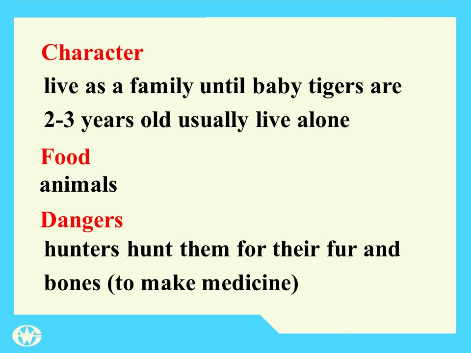 Character Food Dangers live as a family until baby tigers are 2-3 years old usually live alone animals hunters hunt them for their fur and bones (to m