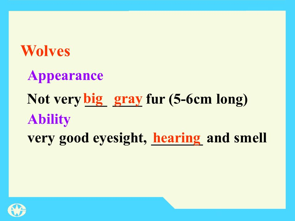 Appearance Ability Not very ___ ____ fur (5-6cm long) very good eyesight, _______ and smell big gray hearing Wolves