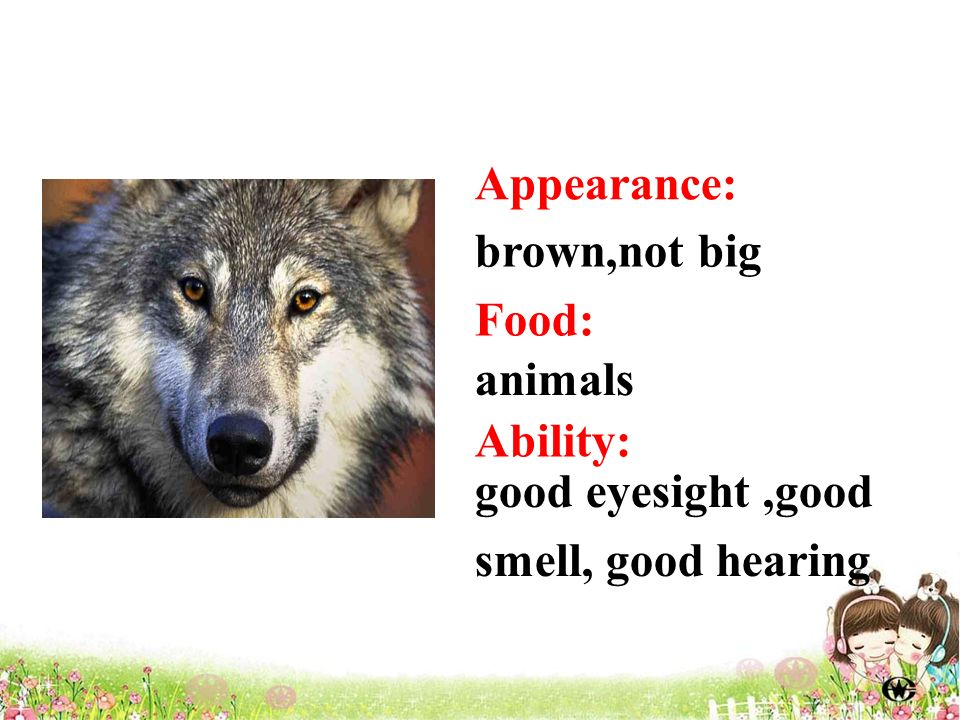 Appearance: brown,not big animals good eyesight,good smell, good hearing Food: Ability: