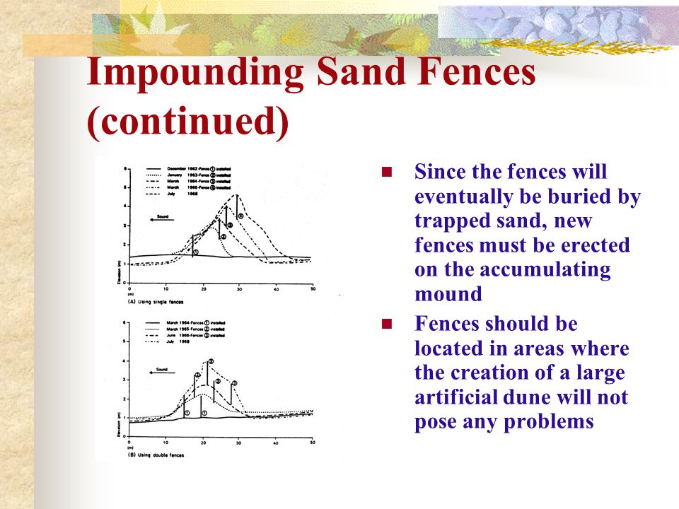 Impounding Sand Fences (continued) Since the fences will eventually be buried by trapped sand, new fences must be erected on the accumulating mound Fe