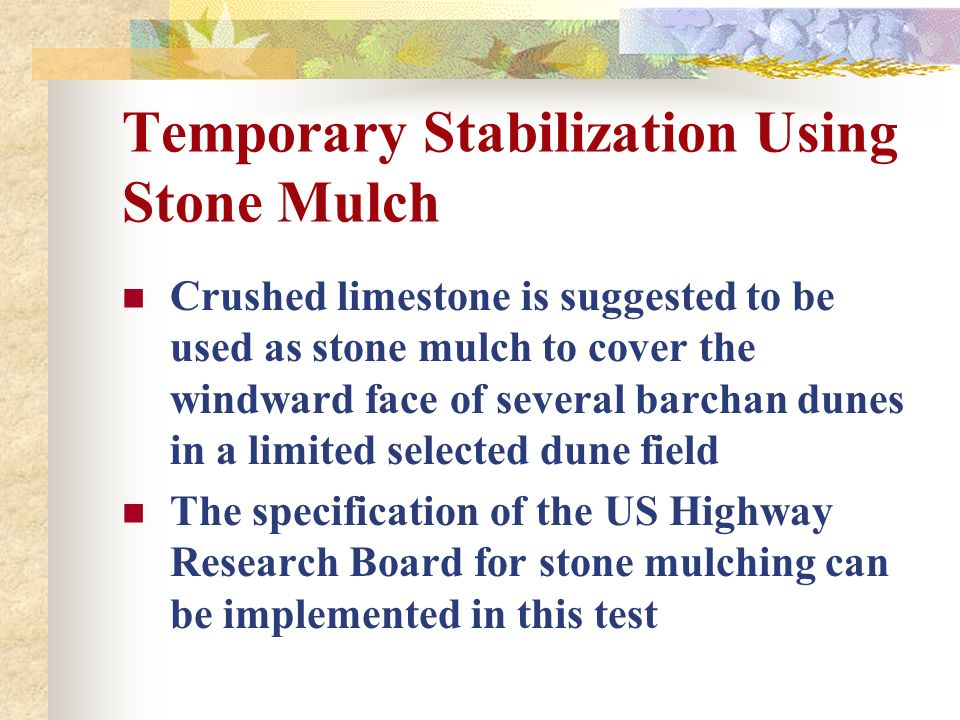 Temporary Stabilization Using Stone Mulch Crushed limestone is suggested to be used as stone mulch to cover the windward face of several barchan dunes