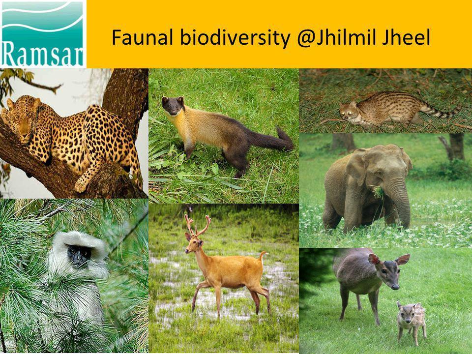 Faunal biodiversity @Jhilmil Jheel Typical Terai habitat island