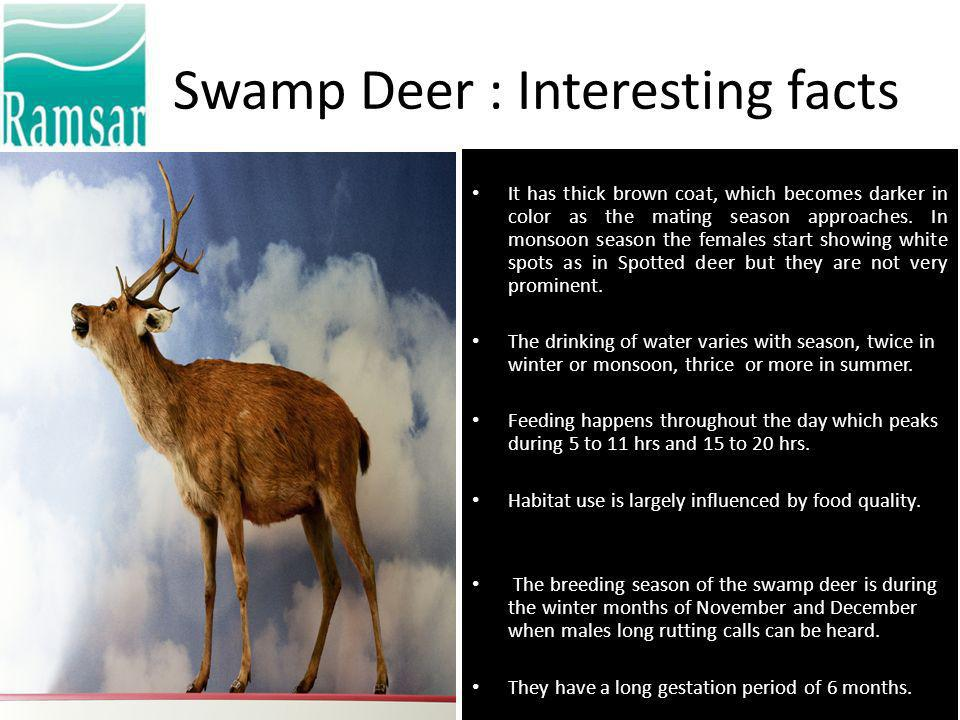 Flagship species: Barasingha Swamp deer (locally known as Barasingha) Cervus duvauceli duvauceli, a vulnerable species in IUCN SSC list using information from Cervid specialist group is authentically reported in the area by the foresters of Haridwar Forest Division.