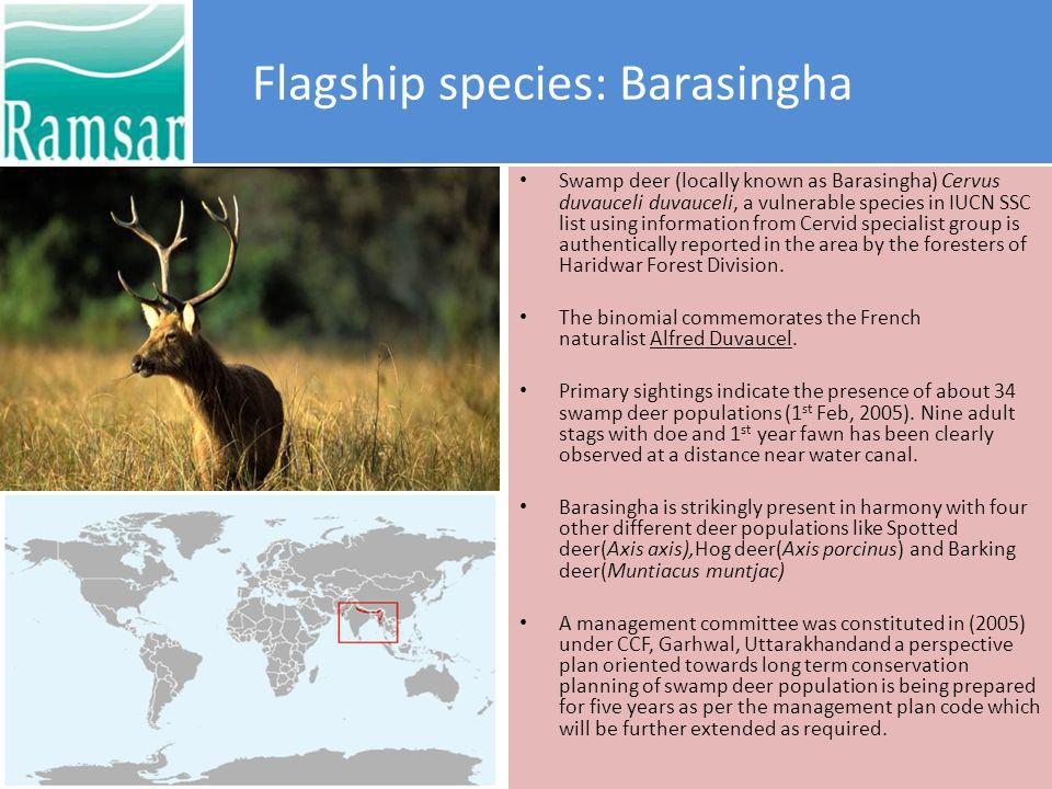 More facts on Barasingha KingdomPhylumClassOrderFamily ANIMALIACHORDATAMAMMALIACETARTIODACTYLACERVIDAE Groves (1982) defined three subspecies with distributions (from Qureshi et al.