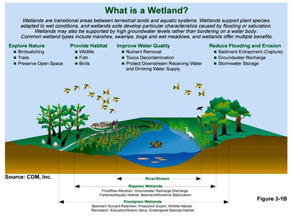 Wetland :: Ramsar Definition Under the Ramsar international wetland conservation treaty, an international agreement signed by 160 countries, wetlands are defined as follows: Article 1.1: ...wetlands are areas of marsh, fen, peatland or water, whether natural or artificial, permanent or temporary, with water that is static or flowing, fresh, brackish or salt, including areas of marine water the depth of which at low tide does not exceed six metres.