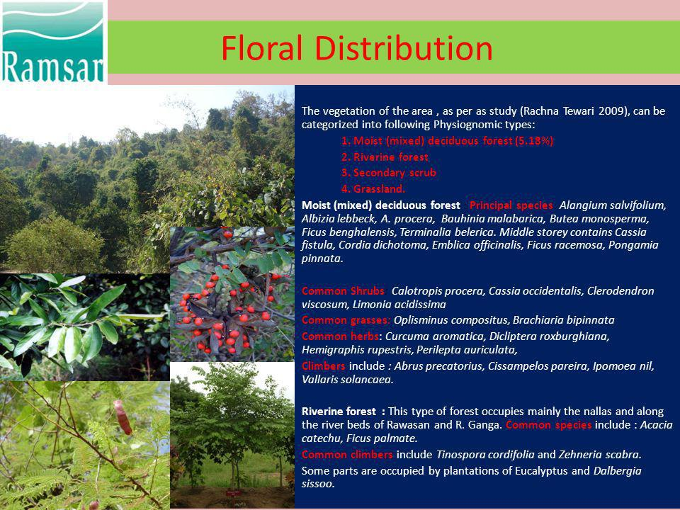 Floral Distribution The vegetation of the area, as per as study (Rachna Tewari 2009), can be categorized into following Physiognomic types: 1. Moist (