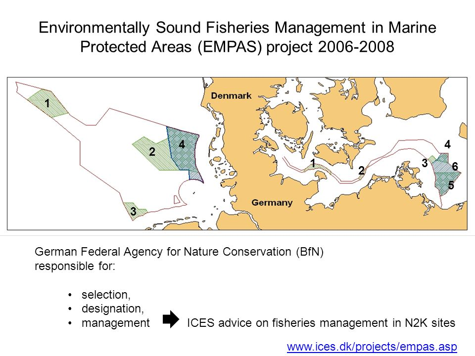 German Federal Agency for Nature Conservation (BfN) responsible for: selection, designation, management ICES advice on fisheries management in N2K sites Environmentally Sound Fisheries Management in Marine Protected Areas (EMPAS) project 2006-2008 1 2 3 4 1 2 3 4 5 6 North Sea Baltic Sea www.ices.dk/projects/empas.asp
