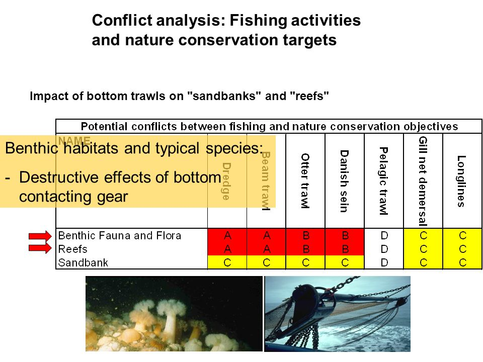 Impact of bottom trawls on sandbanks and reefs Benthic habitats and typical species: -Destructive effects of bottom contacting gear Conflict analysis: Fishing activities and nature conservation targets