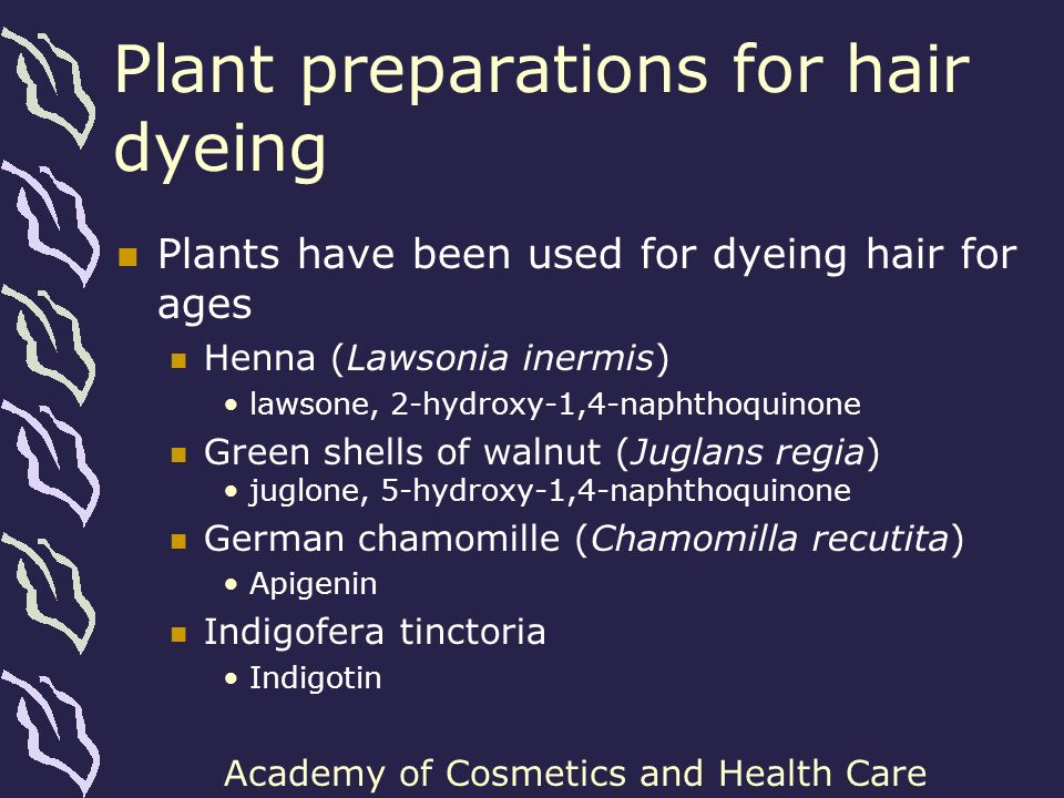 Academy of Cosmetics and Health Care Other plants of interest Other plants used traditionally for hair coloration in Europe Sweet sedge (Acorus calamus) Rhubarb (Rheum spp.) Oak bark Plants containing high amount of dyes and pigments of intense shade Hibiscus (Hibiscus sabdariffa) Cornflower (Centaurea cyanus)