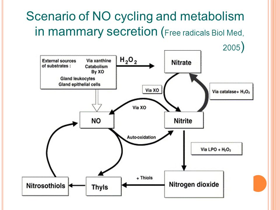 Scenario of NO cycling and metabolism in mammary secretion ( Free radicals Biol Med, 2005 )