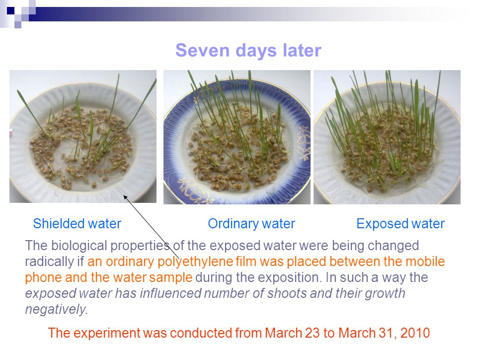 Seven days later The experiment was conducted from March 23 to March 31, 2010 The biological properties of the exposed water were being changed radically if an ordinary polyethylene film was placed between the mobile phone and the water sample during the exposition.