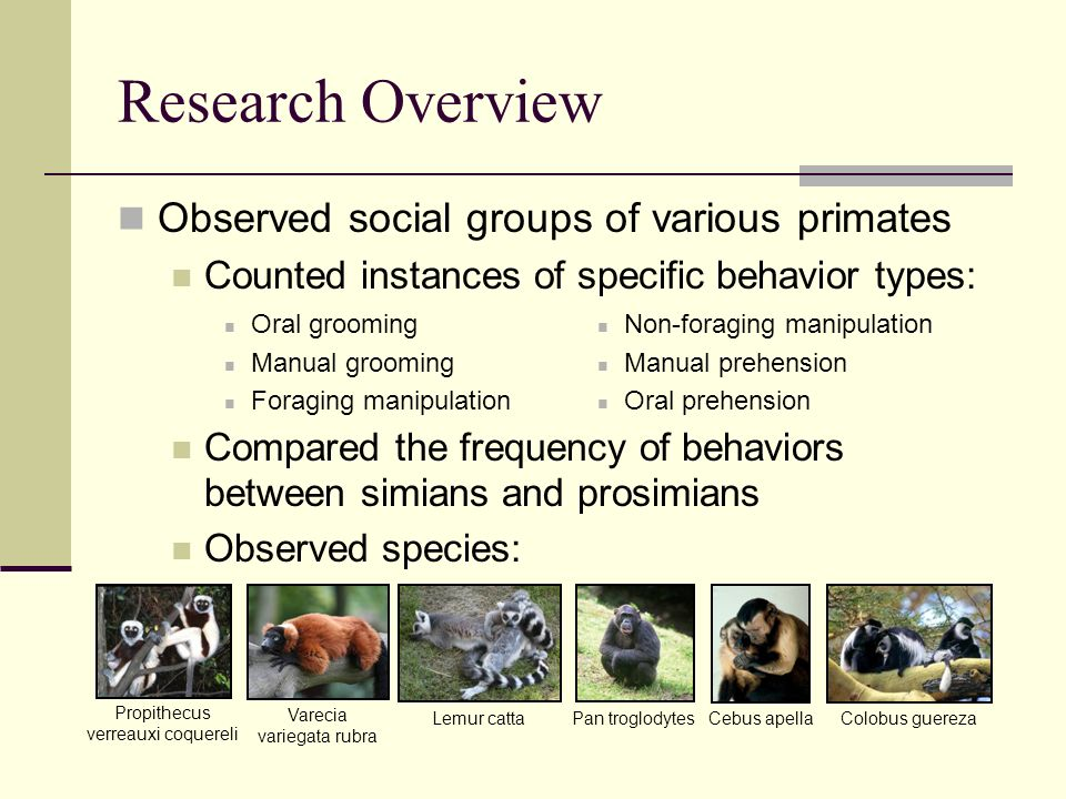 Research Overview Observed social groups of various primates Counted instances of specific behavior types: Oral grooming Manual grooming Foraging manipulation Non-foraging manipulation Manual prehension Oral prehension Compared the frequency of behaviors between simians and prosimians Observed species: Propithecus verreauxi coquereli Varecia variegata rubra Lemur cattaPan troglodytesCebus apellaColobus guereza