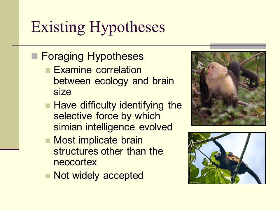 Existing Hypotheses Foraging Hypotheses Examine correlation between ecology and brain size Have difficulty identifying the selective force by which simian intelligence evolved Most implicate brain structures other than the neocortex Not widely accepted