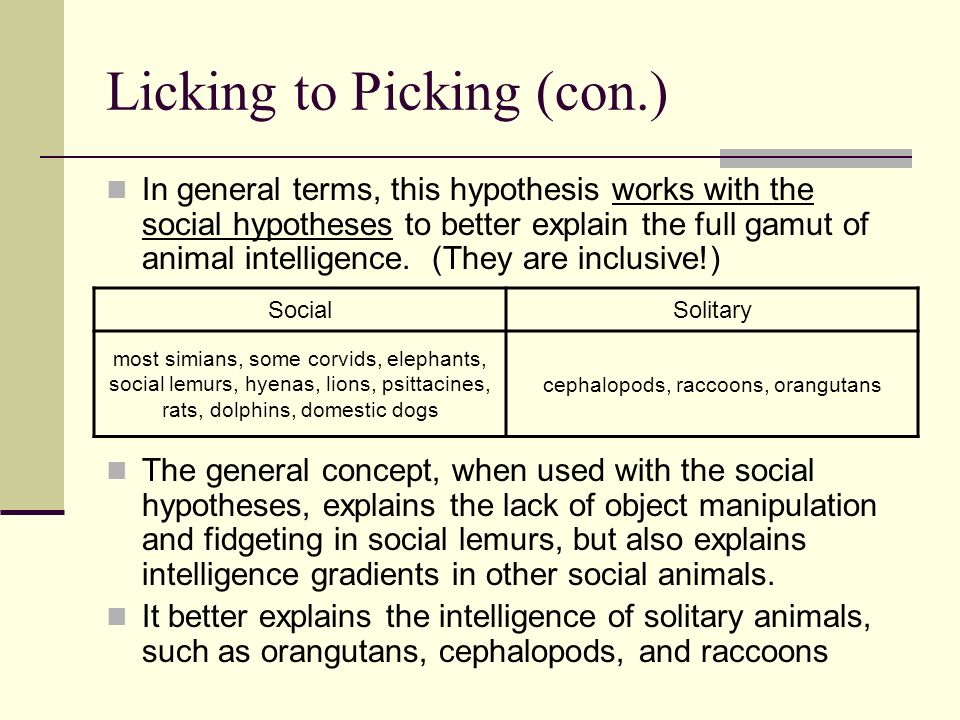 Licking to Picking (con.) In general terms, this hypothesis works with the social hypotheses to better explain the full gamut of animal intelligence.