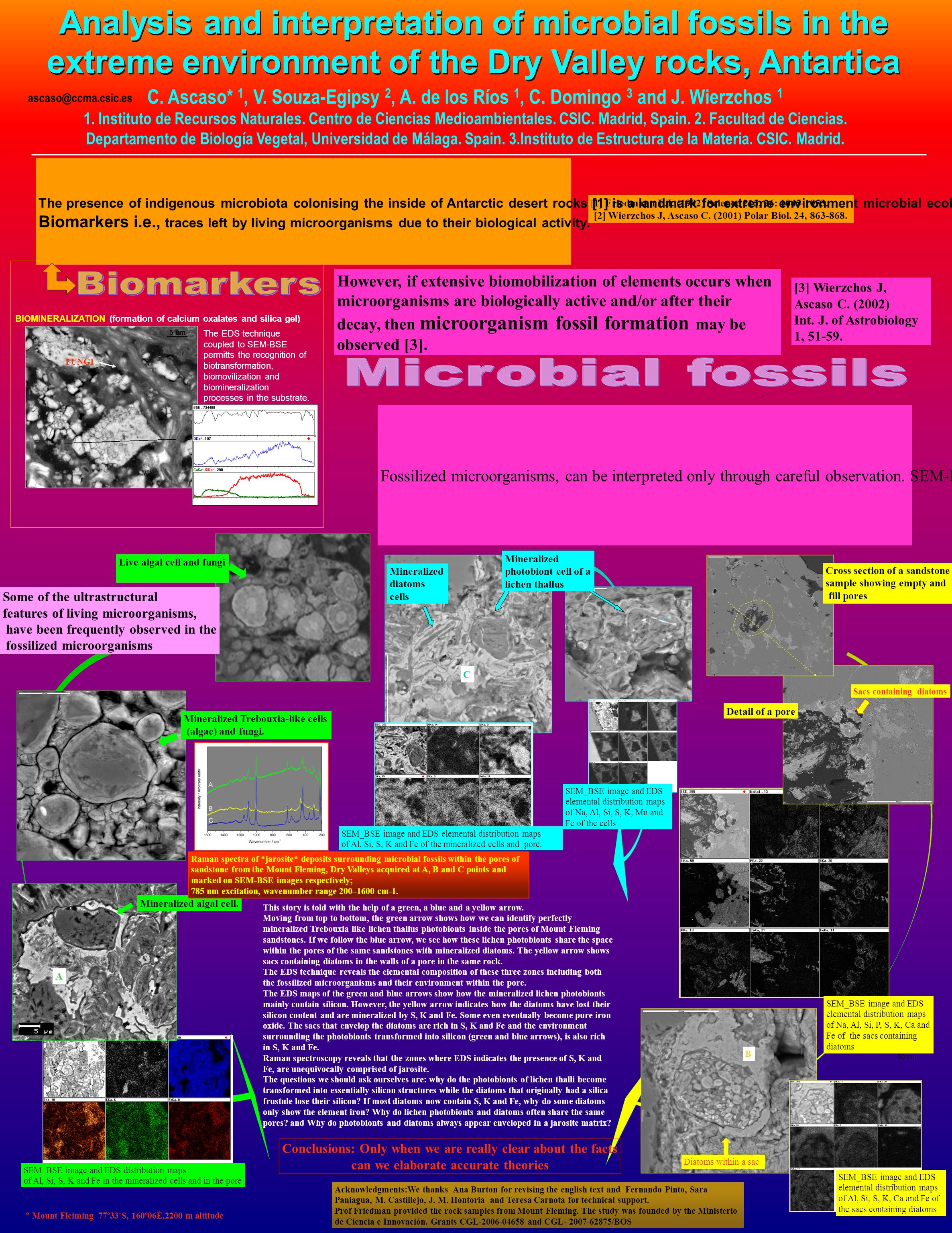 SEM_BSE image and EDS elemental distribution maps of Na, Al, Si, S, K, Mn and Fe of the cells C This story is told with the help of a green, a blue an
