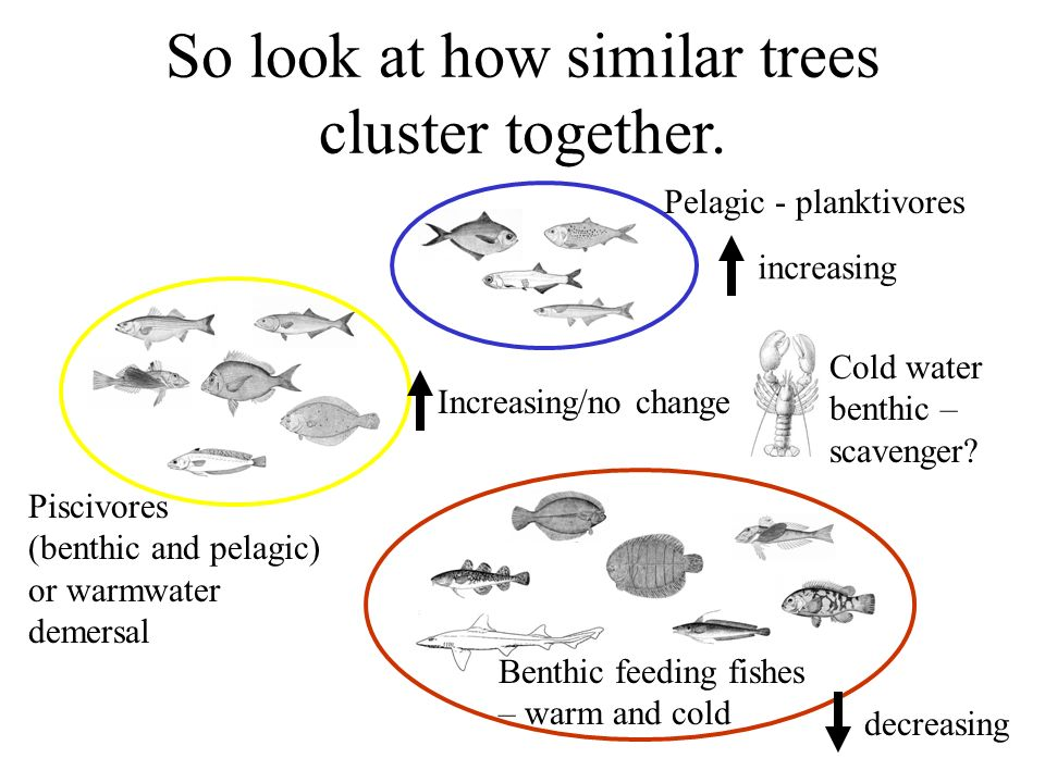 So look at how similar trees cluster together. Cold water benthic – scavenger.