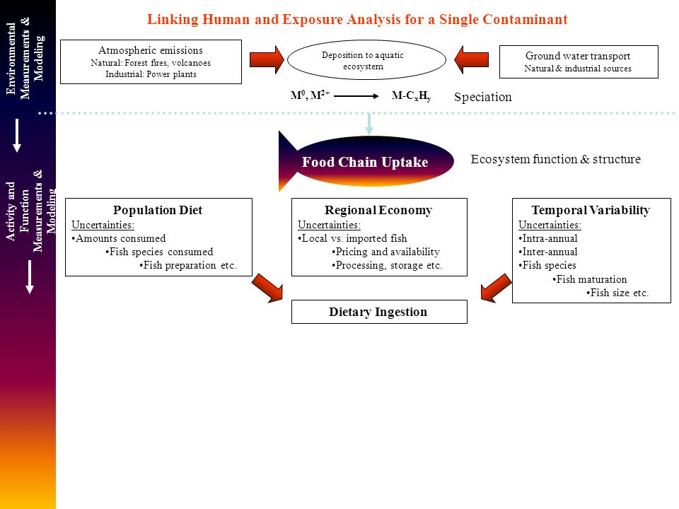 Deposition to aquatic ecosystem M 0, M 2+ M-C x H y Food Chain Uptake Linking Human and Exposure Analysis for a Single Contaminant Atmospheric emissions Natural: Forest fires, volcanoes Industrial: Power plants Population Diet Uncertainties: Amounts consumed Fish species consumed Fish preparation etc.