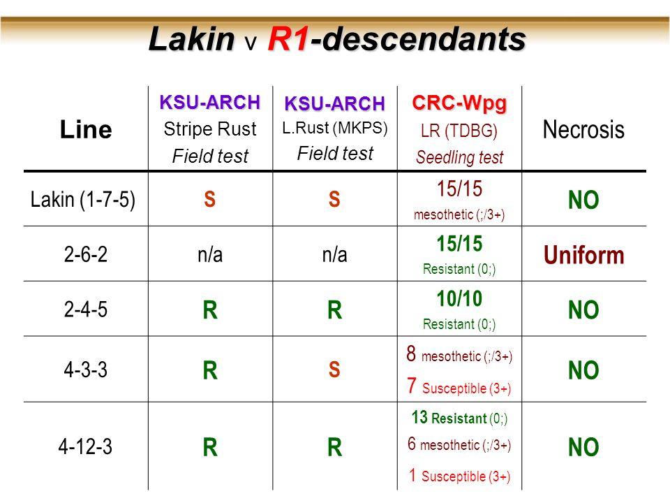 Lakin R1-descendants Lakin v R1-descendants LineKSU-ARCH Stripe Rust Field testKSU-ARCH L.Rust (MKPS) Field testCRC-Wpg LR (TDBG) Seedling test Necrosis Lakin (1-7-5) SS 15/15 mesothetic (;/3+) NO 2-6-2n/a 15/15 Resistant (0;) Uniform 2-4-5 RR 10/10 Resistant (0;) NO 4-3-3 R S 8 mesothetic (;/3+) 7 Susceptible (3+) NO 4-12-3 RR 13 Resistant (0;) 6 mesothetic (;/3+) 1 Susceptible (3+) NO