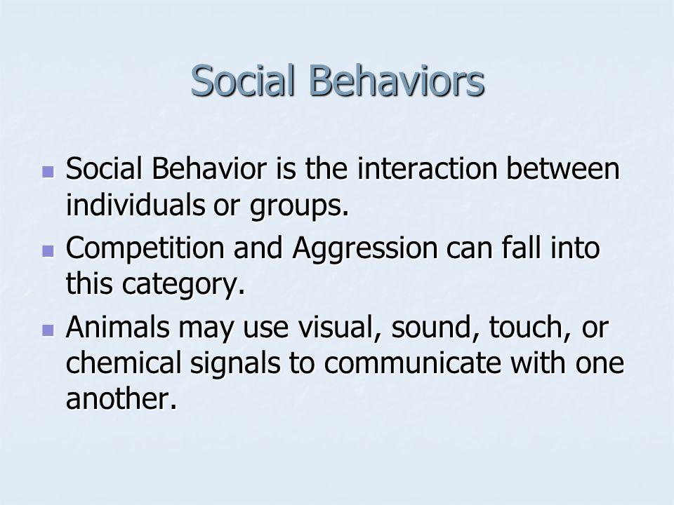 Social Behaviors Social Behavior is the interaction between individuals or groups. Social Behavior is the interaction between individuals or groups. C