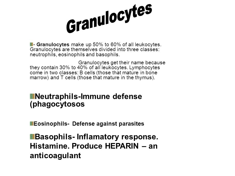 1/2/4 discussion…45 second time limit Granulocytes Agrainulocytes Neutrophils Eosinophils Basophils Lymphocytes Monocytes