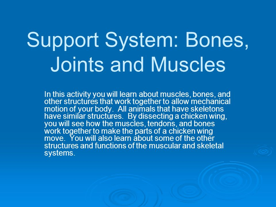 Support System: Bones, Joints and Muscles In this activity you will learn about muscles, bones, and other structures that work together to allow mecha