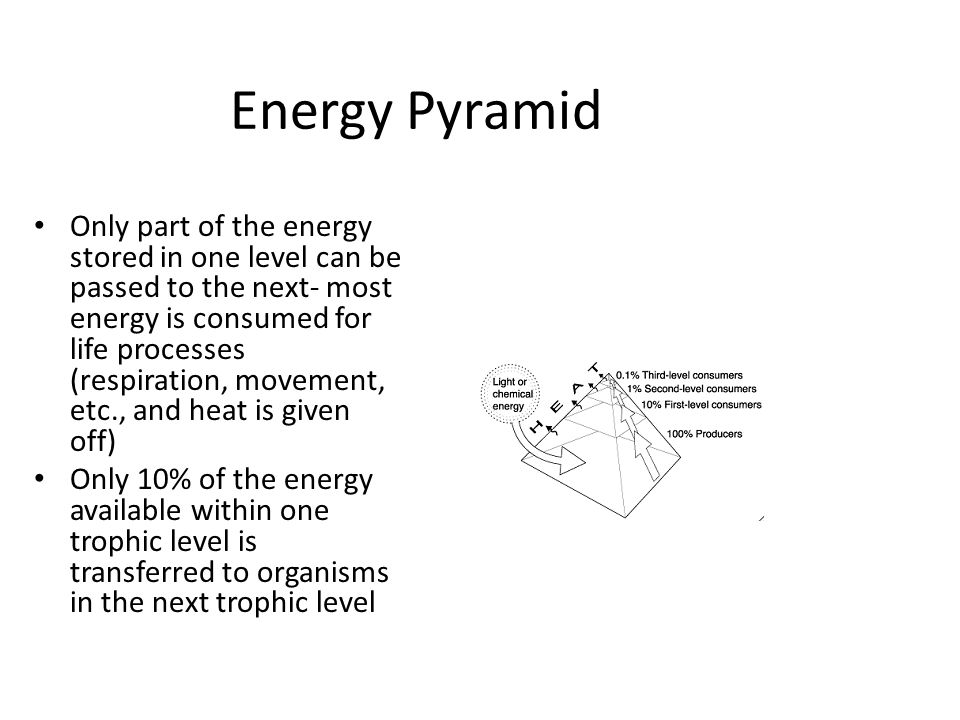 Energy Pyramid Only part of the energy stored in one level can be passed to the next- most energy is consumed for life processes (respiration, movemen