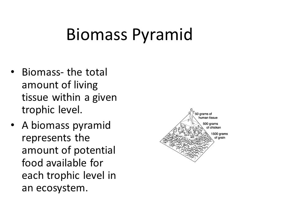 Biomass Pyramid Biomass- the total amount of living tissue within a given trophic level. A biomass pyramid represents the amount of potential food ava
